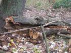 prace w parku - pielęgnacja drzewostanu, budowa alejek